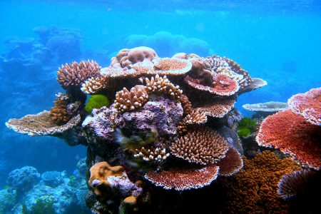 Coral outcrop on Flynn Reef