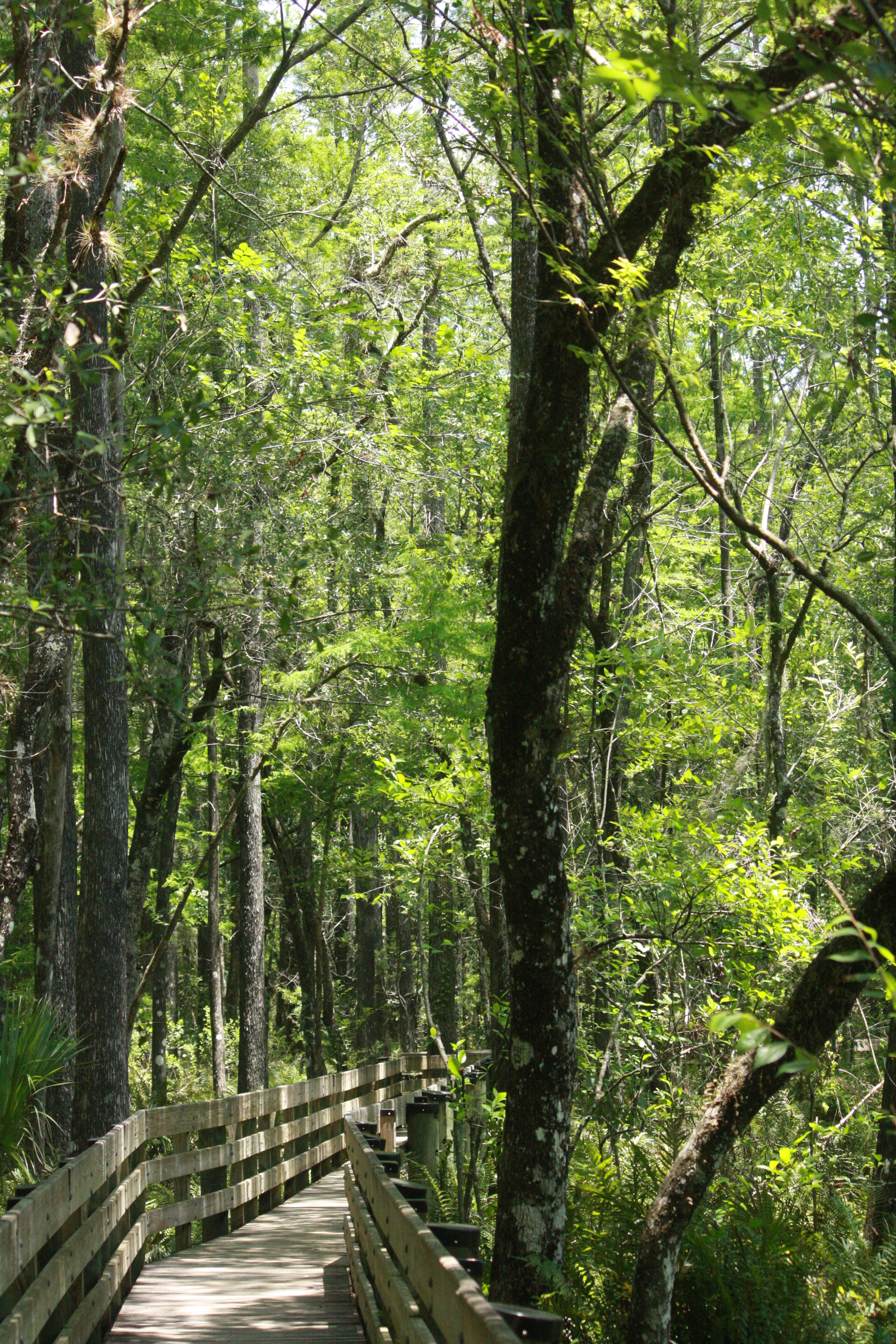 Visit The Six Mile Cypress Slough Preserve For Free