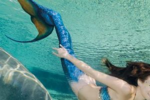Mermaids swim at Weeki Wachee Springs state park