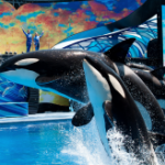Free SeaWorld Orlando passes for teachers