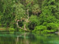 Florida state parks with springs & tubing