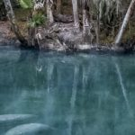 See Manatees at Blue Spring State Park in Florida